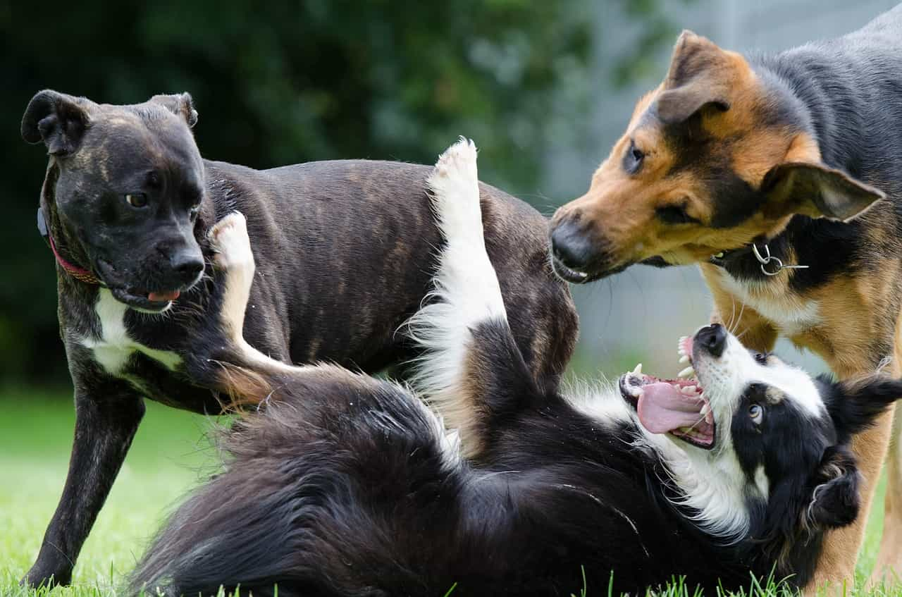 welche Hunderasse passt zu dir?