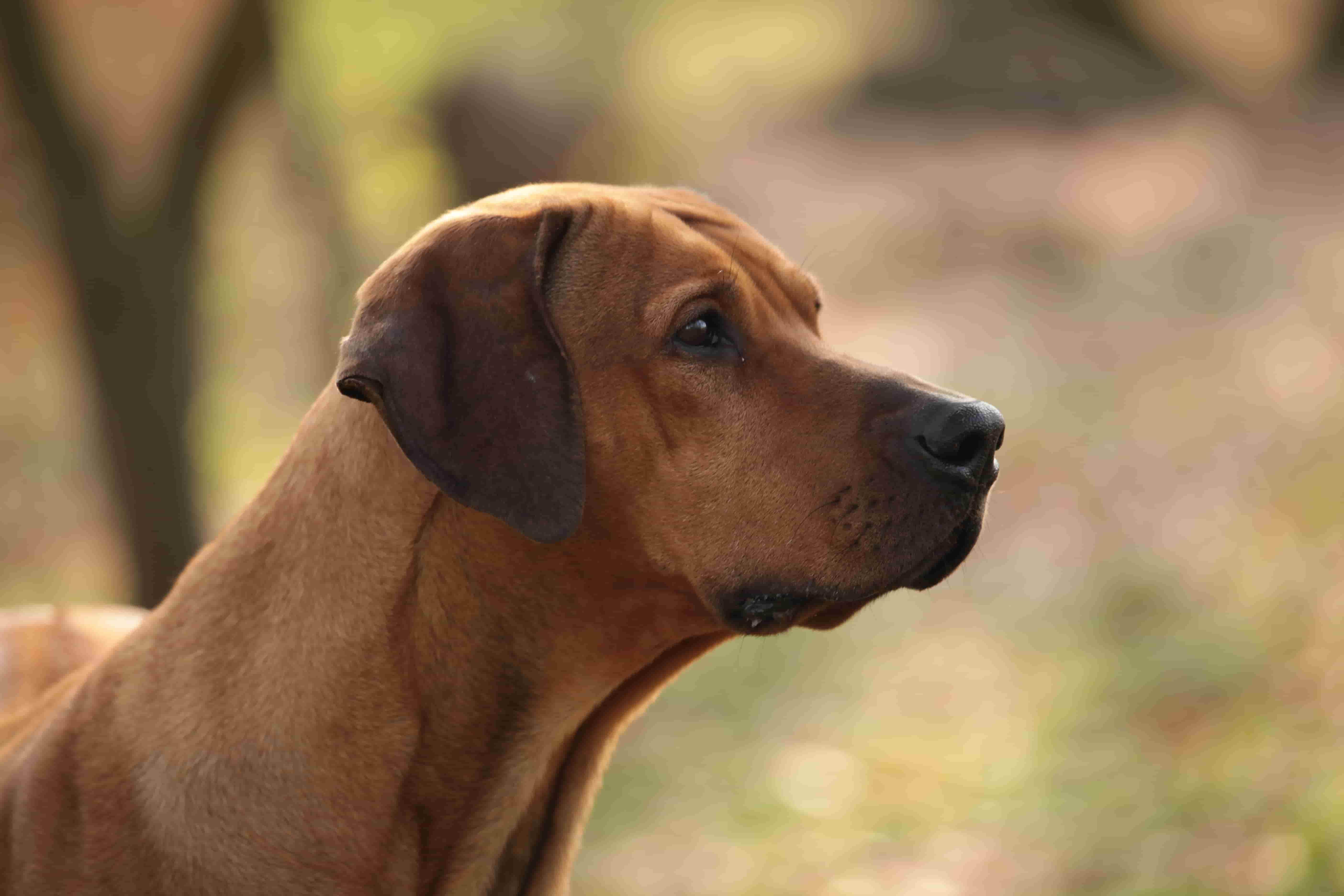Jagdtrieb Hund kontrollieren
