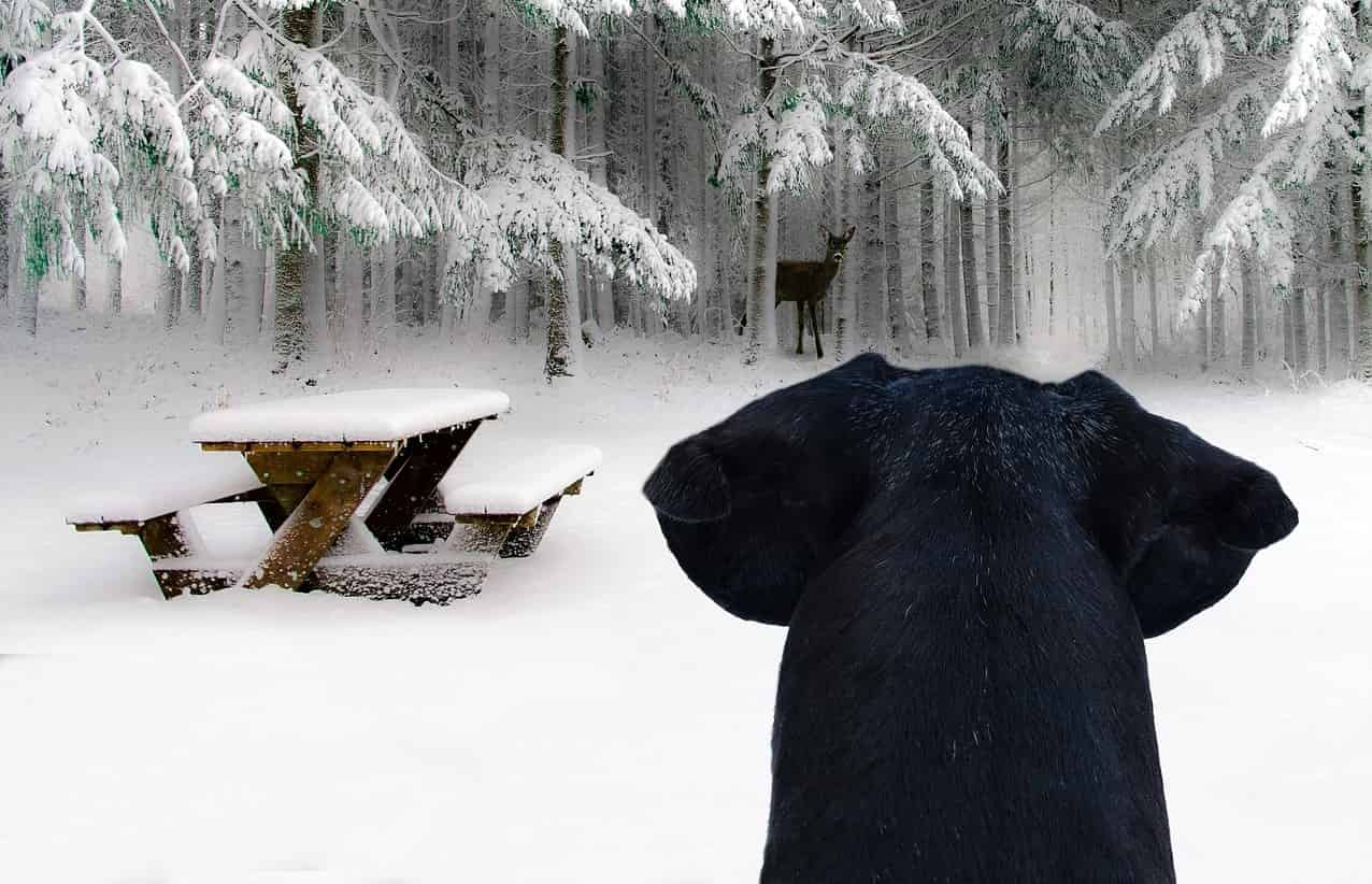 Hund jagt Reh