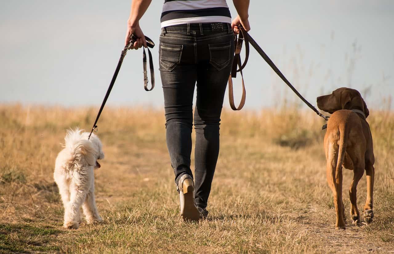 Hund an anderen Hunden vorbeiführen