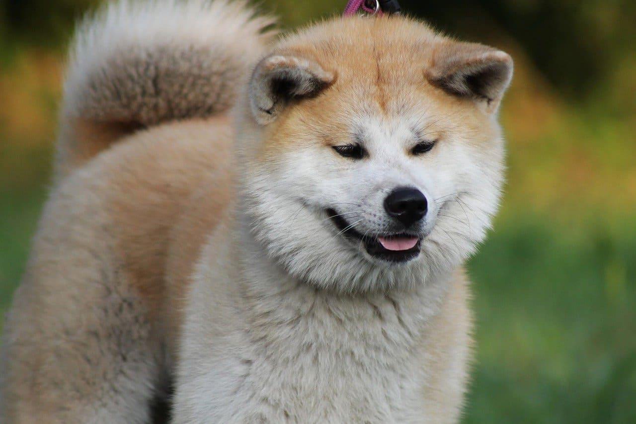 Körpersprache Hund Bilder