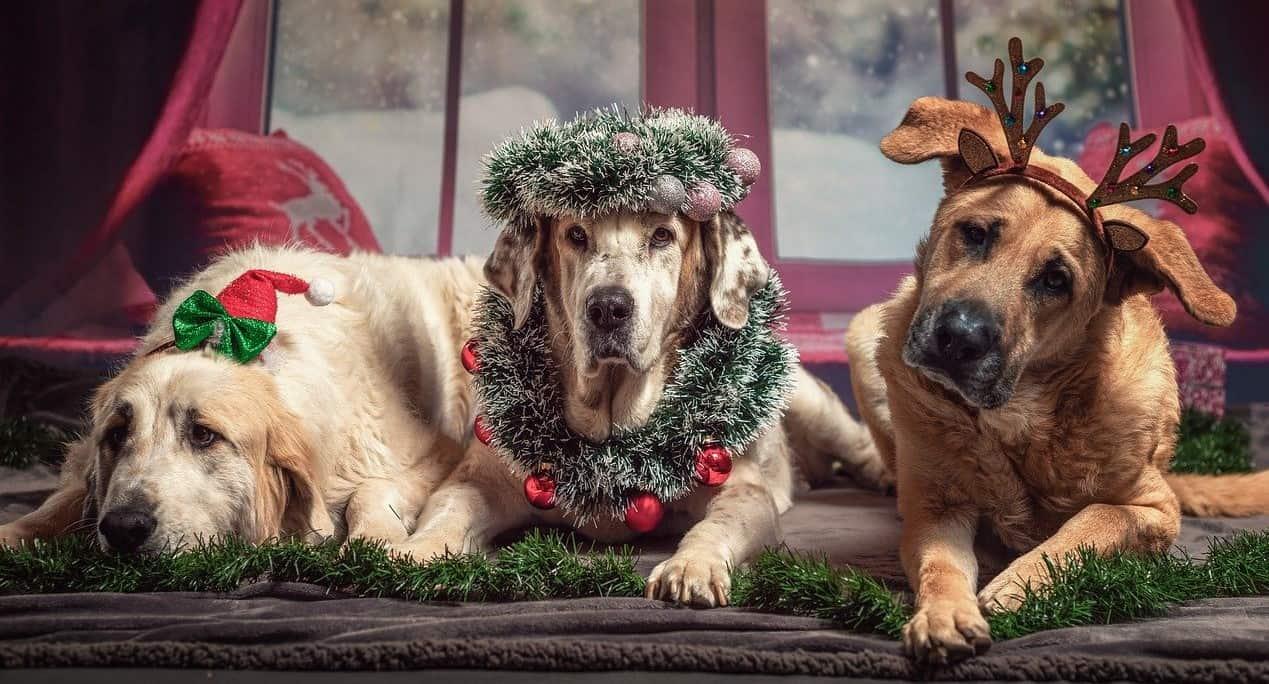 Weihnachten Hund Geschenke