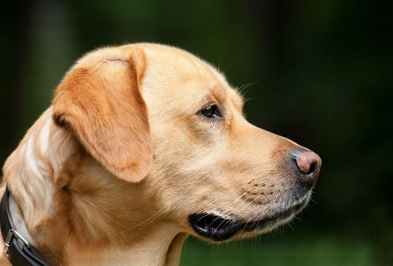 Hunde Verhalten deuten